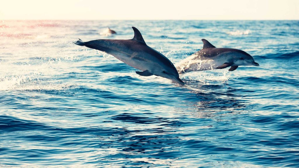 Algarve Dolphin Watching